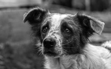 Tűzijáték helyett kutyatáp – akció az ebtelep lakóiért