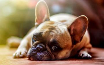 Ivartalanítsuk a kutyákat? A válasz: igen!
