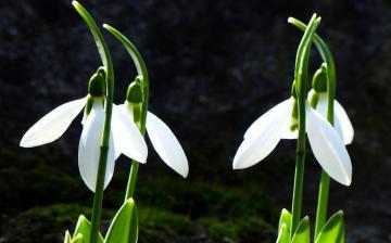 Kopogós kezdet, aztán tépés télből a tavaszba