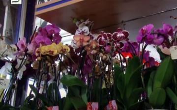 DSTV: pánik után, nőnap előtt a virágboltban