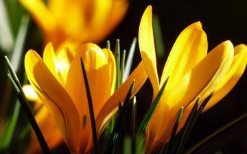 Időjárás: tavaszébresztő hetünk lesz