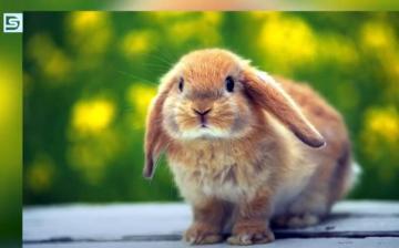 DSTV: felelős állattartást húsvétkor is!