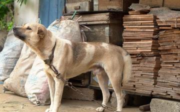 Pénzbüntetés járt az állatkínzásért