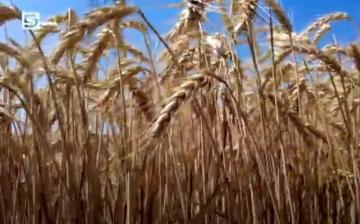 DSTV: eljött az aratás ideje