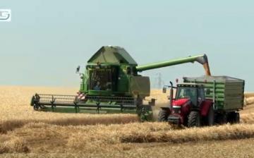DSTV: javában tart már az aratás