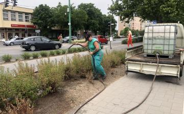 Fokozott öntözéssel próbálják védeni a növényeket