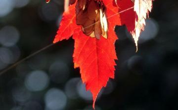 Csendes, nyugalmas, derült idővel búcsúzik az október