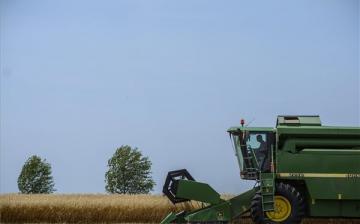 Jó a város környéki gabonatermés