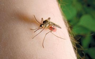 Véget ért a szúnyoggyérítési program