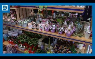 Embedded thumbnail for DSTV: pánik után, nőnap előtt a virágboltban