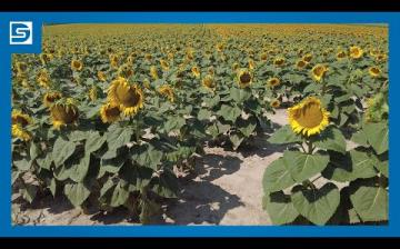 Embedded thumbnail for DSTV: eljött az aratás ideje