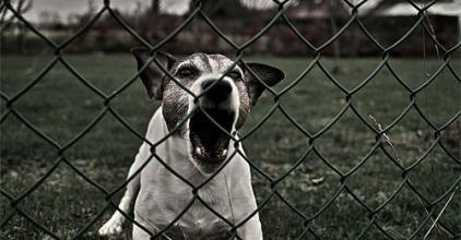 Kutyatámadás Mezőfalván